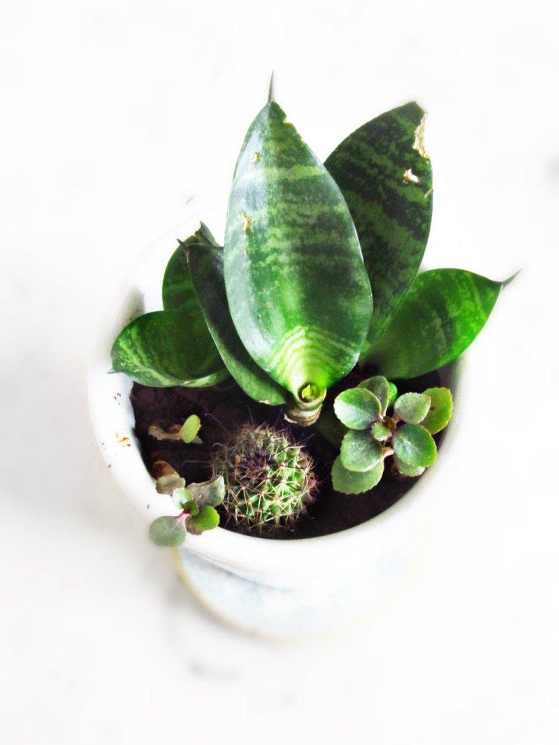 succulent arangement