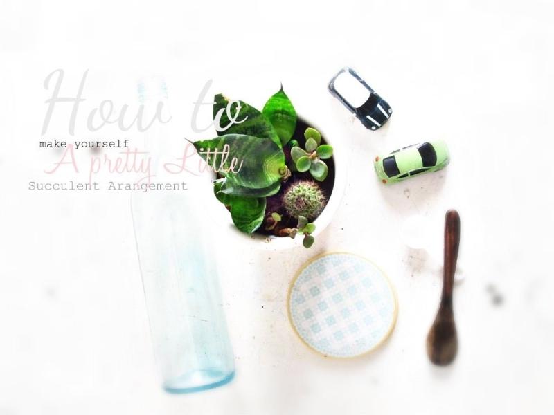 Succulent Arrangement 3