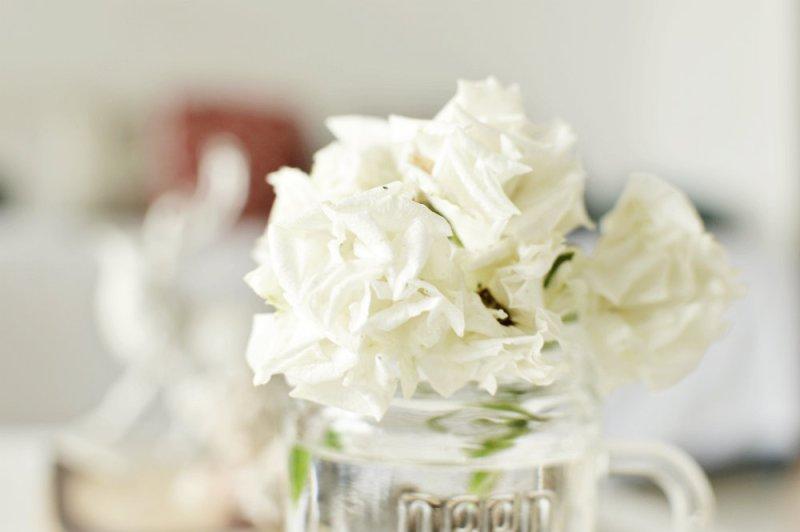 White rose trumatter 1