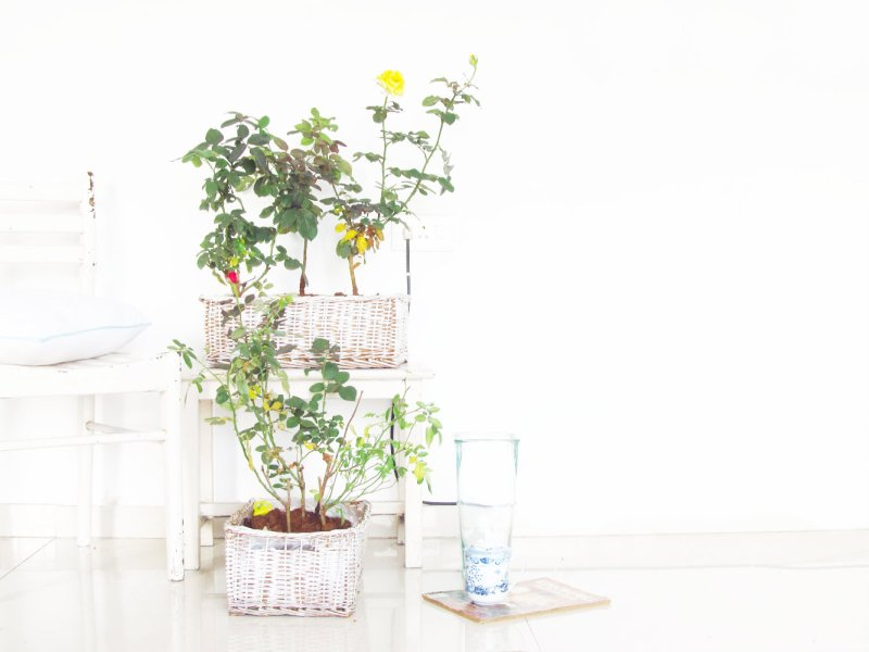 basket planter 3