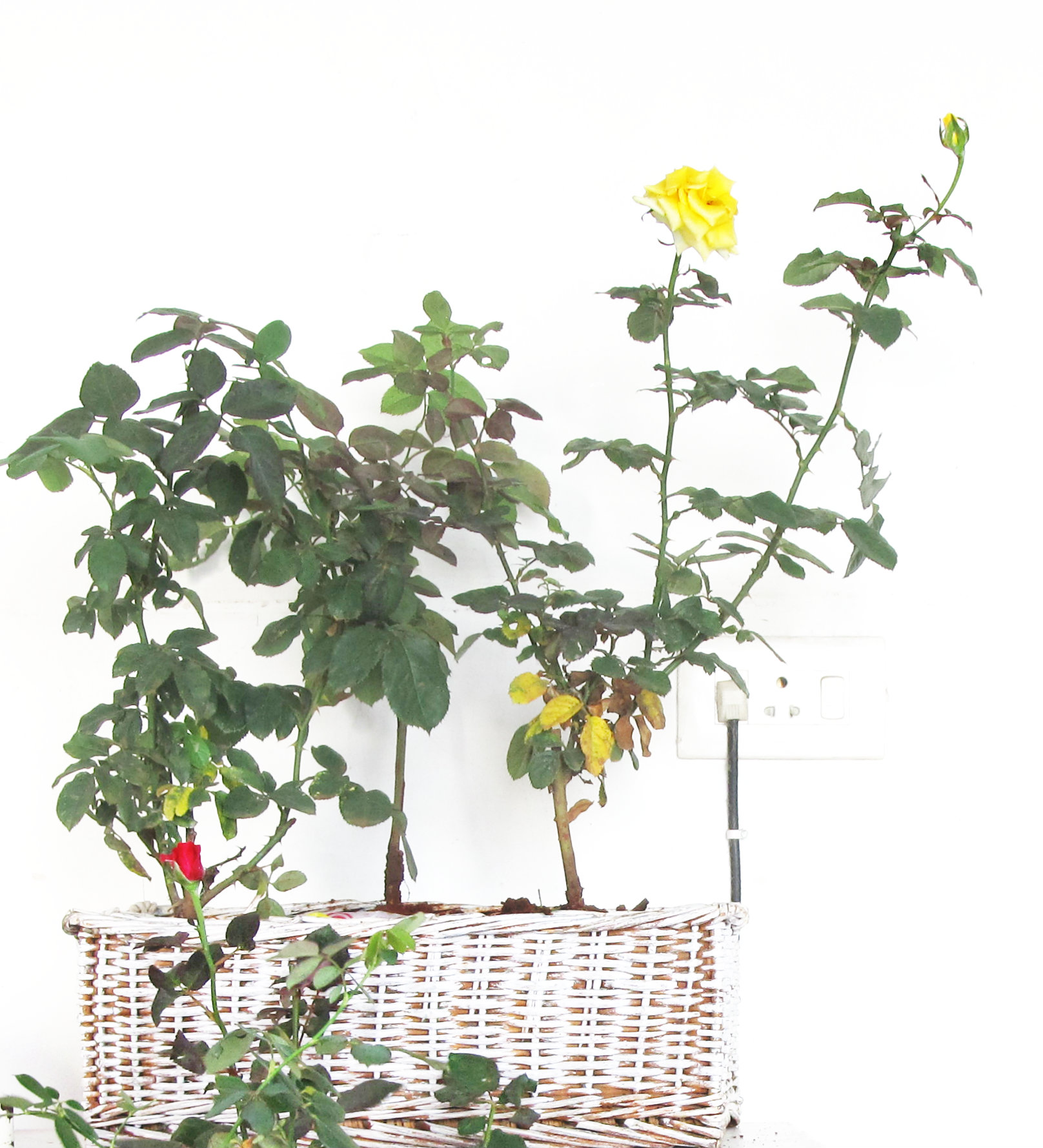 basket planter 5